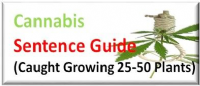 Caught Cultivating Marijuana Class B Drug 25-50 cannabis plants Sentence Guide UK